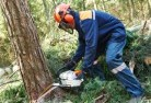 Alfred Cove Tree cutting services 21